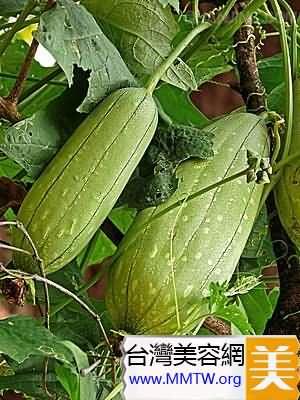 絲瓜可美容養顏