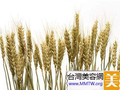 第三天減肥狀元:小麥胚芽