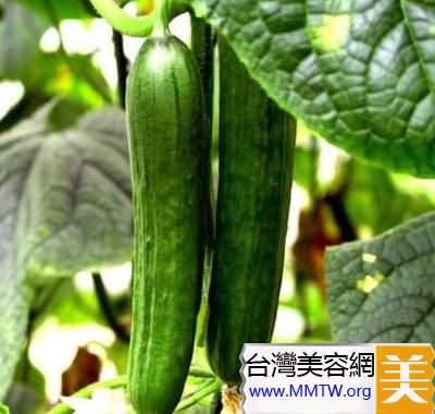 大黃瓜更適合減肥的人士食用