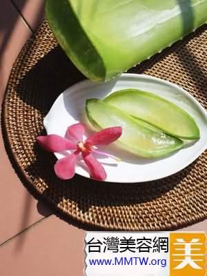 夏季清爽蘆薈減肥食譜 1月健康瘦8斤