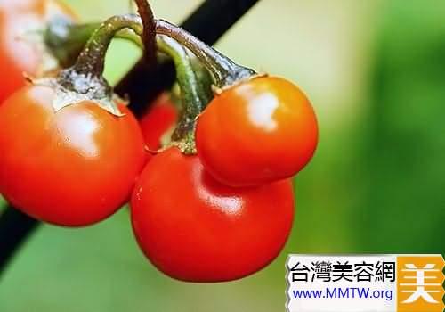 番茄減肥食譜